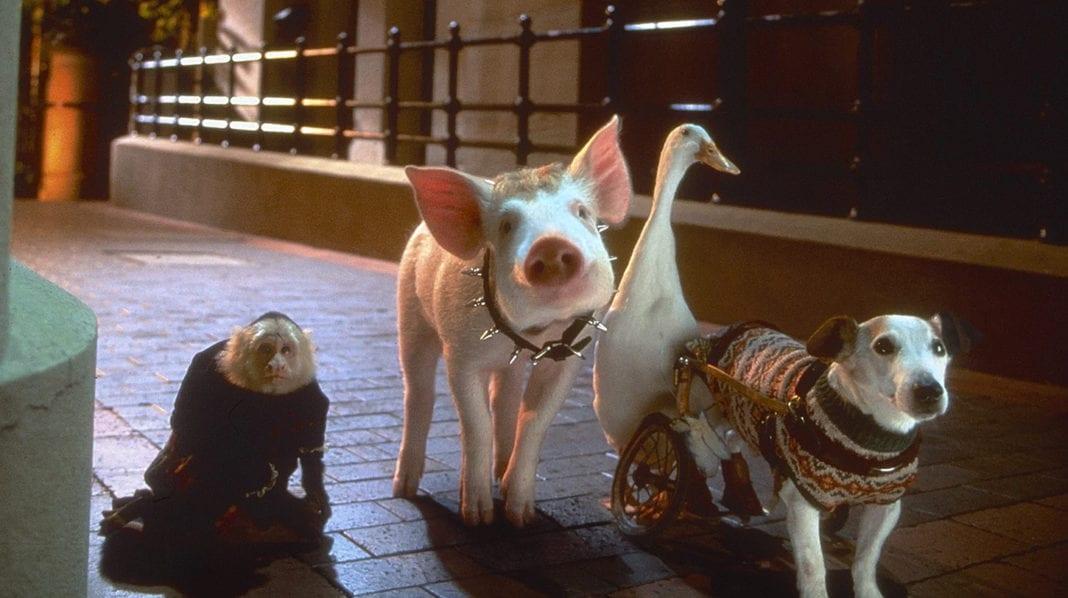Babe. El cerdito en la ciudad (1998)